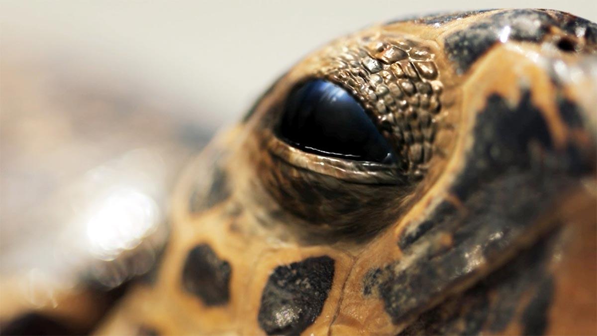 Hilton Head Turtle